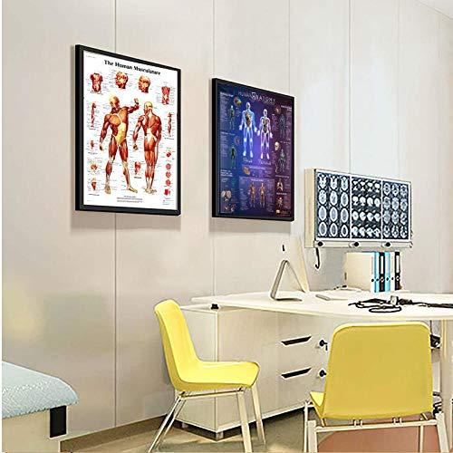 kldfig menselijke anatomie spieren systeem kunst poster afdrukken lichaam kaart afbeeldingen voor medische opleiding woning nieuw 60 * 80cm niet ingelijste 2 stuks