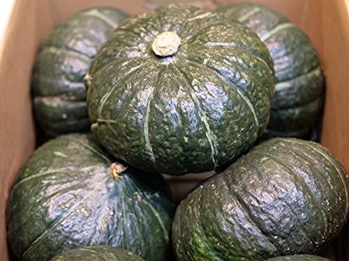 北海道産 かぼちゃ 黒王 秀品 5玉入 約9〜10kg(箱)