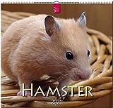 Hamster: Original Stürtz-Kalender 2021 - Mittelformat-Kalender 33 x 31 cm