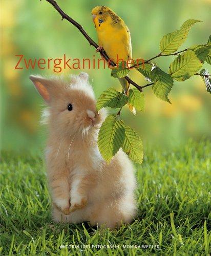 Zwergkaninchen (GU TierRatgeber) - 4