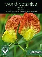 WB 英国ジョンソンズシード Johnsons Seeds world botanics collection Lathyrus belinensis ラシラス(スイートピー)・ベリネンシス