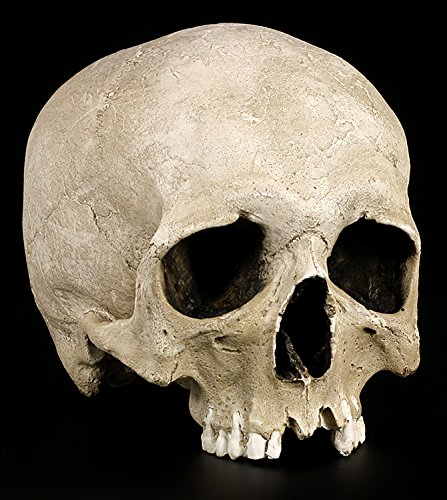 Totenkopf Replikat Mann lebensecht - Menschen Schädel Figur