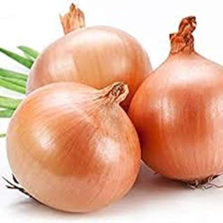Texas Early Grano Onions Seeds, 300+ Premium Heirloom Seeds, Fantastic Addition to Your Home Garden! Sweet Spanish Flavor! (Isla's Garden Seeds), Non GMO, 85-90% Germination Rates, Highest Quality