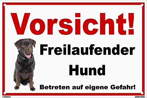 kleberio® - Vorsicht! Freilaufender Hund! Labrador - Schild Kunststoff Warnschild Hinweisschild Vorsicht Hund 20 x 30 cm mit Bohrlöchern