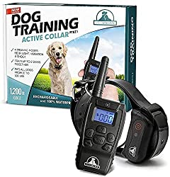 Best Dog Training Collar For Large Dogs
