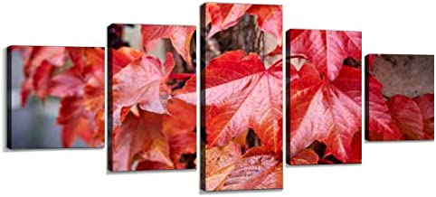 VEXRLU parthenocissus red Leaves at Autumn Colorful autumns and Pictures 5 Pcs Premium Canvas Art Wall Hanging Paintings Modern Abstract Decoration Artworks Gift Unique Designed with Wooden Frame