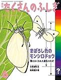 まぼろし色のモンシロチョウ 翅にかくされた進化のなぞ (月刊たくさんのふしぎ2020年6月号)