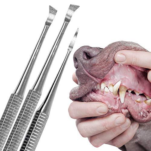 Schecker Zahnsteinentferner Set für Hunde und Katzen 3 teiliges Zahnreiniger Set mit Zahnsteinkratzer