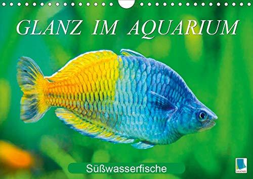 Glanz im Aquarium: Süßwasserfische (Wandkalender 2020 DIN A4 quer): Aquarium: Prachtregenbogenfisch, Marmorskalar & Co. (Monatskalender, 14 Seiten ) (CALVENDO Tiere)