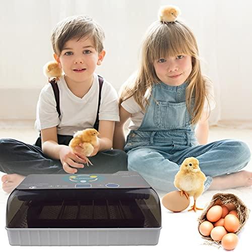 4YANG Incubadora de Huevos, Incubadora de Transferencia automática de 12 Huevos, Incubadora de Aves de Corral Pantalla LED Digital Temperatura controlable, Adecuado para Pollos, Patos, pájaros