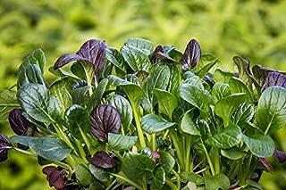 Home Comforts Komatsuna Eat Asia Japanese Spinach Salad Spinach Vivid Imagery Laminated Poster Print 11 x 17