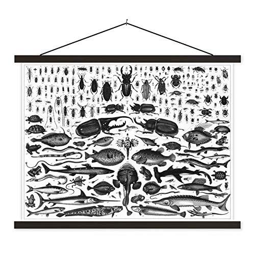 Textil Poster Fisch Illustration - Schwarz-Weiß-Darstellung vieler Fischarten 40x30 cm - Kleine Wandbild auf Textil mit Schwarz Rahmen - Scroll Poster/Textilplakat/ Schulplakat Wanddeko/ Wall Art