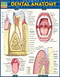 Dental Anatomy - Laminated (Quick Study Academic)