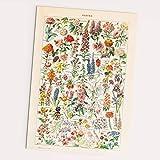 Follygraph Fleurs Vintage Poster - Blumen Bild, Adolphe