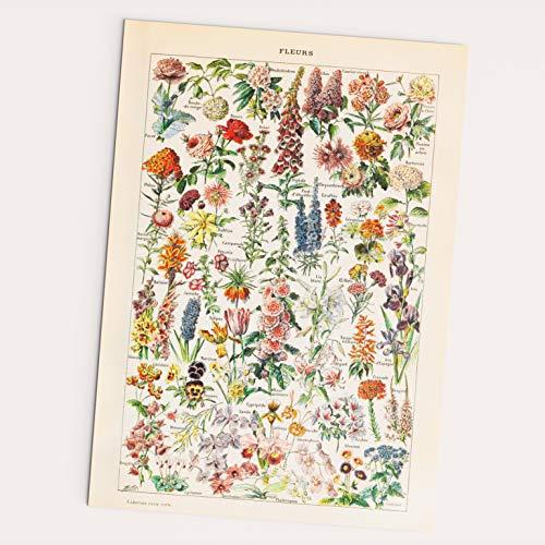 Follygraph Fleurs Vintage Poster - Blumen Bild, Adolphe Millot 1909 Reprint …