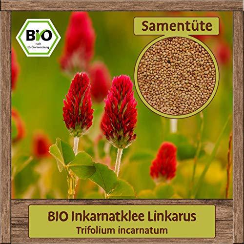 BIO roter Inkarnatklee Samen Blumensamen Inkarnat Klee mehrjähriges Saatgut Bienenweide & Bodenverbesserer