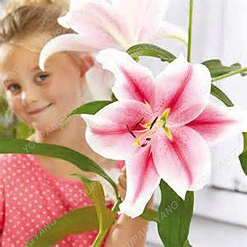 Vente chaude 200Pcs Lily Graines Lily Fleur (Non Lily Bulbes) Lilium Graines de fleurs Faint Parfum Bonsai Plante en pot pour jardin Plantes claires