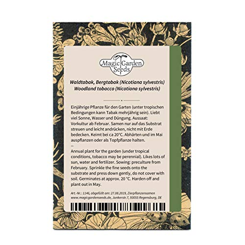 Waldtabak, Bergtabak (Nicotiana sylvestris) 1000 Samen indianische ursprüngliche Sorte