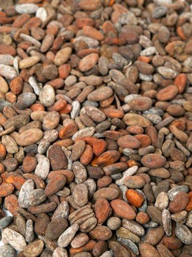 Geröstete Kakaobohnen aus Madagaskar (1000g)