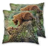CONICIXI 2 Pack Funda de Almohada Bear Brown Rock Grizzly Forest Cantabria España Bokeh Brown Bear Cute Bears Animal Lino Suave Cuadrado Sofá Cama Decoración Hogar para Cojín 45cm x 45cm