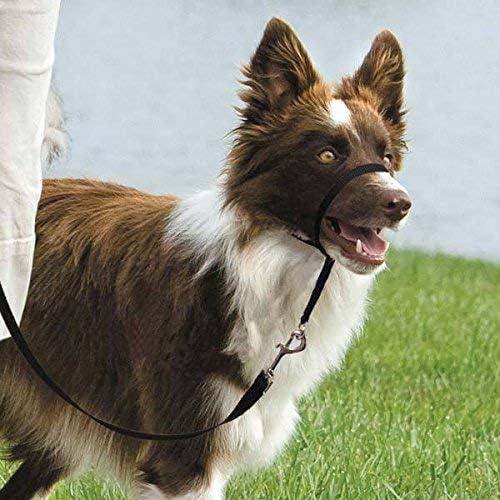Gentle Leader Dog Head NEW Collars - Pulling Training Award U Lunging Stop