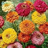 Euphorbia Milii híbridos Mezcla Media 100 semillas grandes flores corona de espinas Semillas...