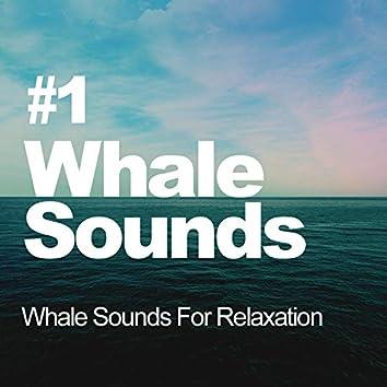 #1 Whale Sounds