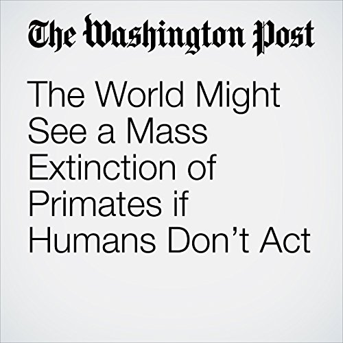The World Might See a Mass Extinction of Primates if Humans Don't Act copertina