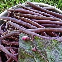 David's Garden Seeds Bean Bush Royalty SL4529 (Purple) 100 Non-GMO, Heirloom Seeds