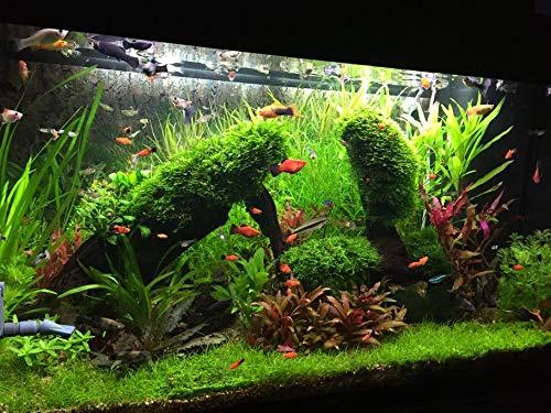 Vajraseeds Aquarium Plants Seeds Mixed 150+ and Water Grass Seeds 150+ Seeds Packet