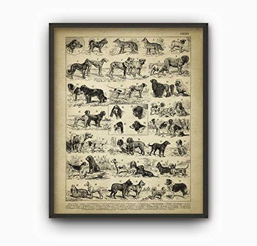 Antike Hunderassen Illustration Drucken Hundetypen Wandkunst Dekor Vintage Hunderasse Poster Französisch Exlibris Illustrationen Hundeplakat