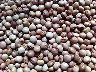 Yunakesa Bulk Pigeon Pea Seeds, A. k.S Gandules Bean, Jamaican Gungo/Congo Peas Tropical Green Pea,(Cajanus cajan) Heirloom Seeds~ Perennial (3 lbs)