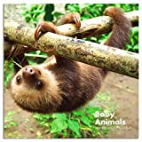 2020-2021 Calendar - Baby Animals Wall Calendar 2020-2021 with Thick & Sturdy Paper, 12 x 12 inches, 18 Months, January 2020 - June 2020