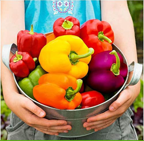 Acecoree Samen- Bio Gemüsesamen Paprika Samenmischung Gemüse-Paprika F1 Gemüse Saatgut Gemüsepaprika winterhart mehrjährig