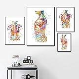 MKWDBBNM Arte de anatomía Cuerpo Humano Abdomen Acuarela Arte de la Pared Pintura en Lienzo Cartel médico clínico nórdico e impresión de imágenes de Pared para consultorio médico Sin Marco