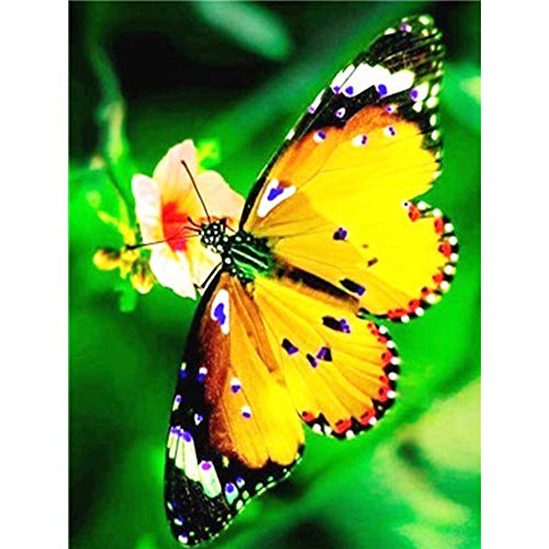 Big Joe Glory Square Full Butterfly Flower 5D Kit DIY Mosaic Diamond Drill Painting Craft