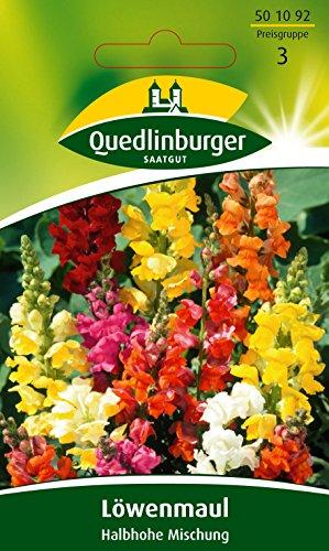 Quedlinburger Löwenmaul-Mischung, 1 Tüte Samen