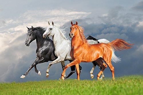 Sticker Selbstklebend oder zeigt Poster Pferde weiß schwarz Roux Jahr _ 00093, Papier, Affiche poster, 21x29,7 cm (A4)