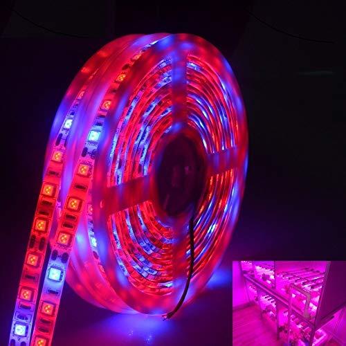 HHF LED Bulbs Lamps, Phyto LED lámpara de luz de Tira SMD 5050 5 Metros de Espectro Completo Crece Luces DC 12V Bulbos Fitolampy for Las Plantas de Las Semillas de Flor de iluminación