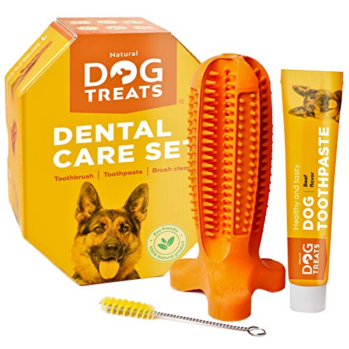 Natural Dog Treats Toothbrush Stick and Toothpaste Beef Flavor Dental Care Cleaning Set, 100% Natural Rubber Chew Toy for Dogs, Size Large Delaware