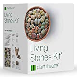 Plant Theatre Living Stones Kit - Lithops Gift Seed Kit - Everything You Need in one Box to Grow These Unusual...