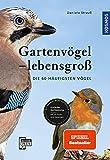 Gartenvögel lebensgroß: Die 60 häufigsten Vögel, Einfache Bestimmung, Mit 60 Rufen und Gesängen