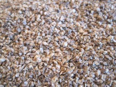 Commonbaits Dafnias Pulgas de Agua 500ml