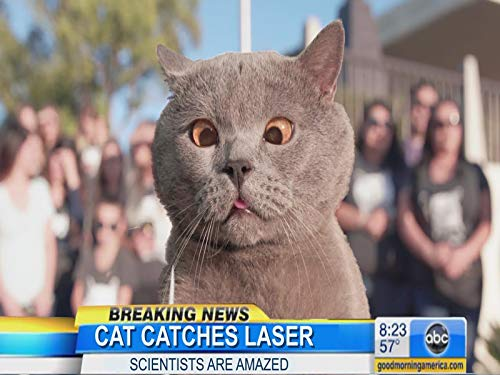 The Cat Who Caught The Laser