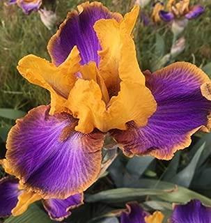 2008 Van Liere - Crooked Little Smile - Tall Bearded Iris Rhizome Upc 656793277015