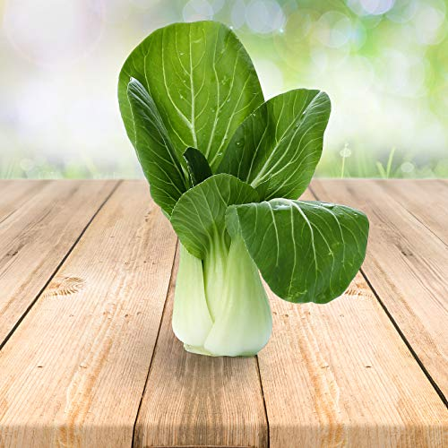 Pak Choi 250 x Samen - Aus Portugal 100% Natürlich Ohne Chemische Anzuchthilfe Oder Gentechnik, Einfach Nur Natur Pur