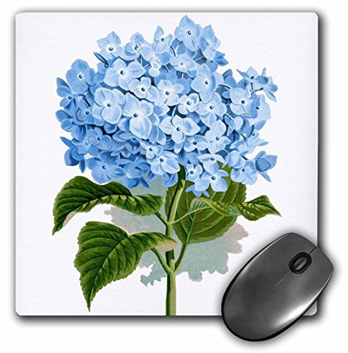 3dRose 8 x 8 x 0.25 Inches Mouse Pad, Blue Hydrangea Flowers Vintage Art (mp_151419_1)
