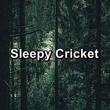 Sleepy Cricket