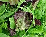 350 Organic Blend Seeds Gourmet Lettuce Unique Tasty Mix