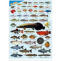 ザ・アクセス 淡水・熱帯魚大全 クリアファイル